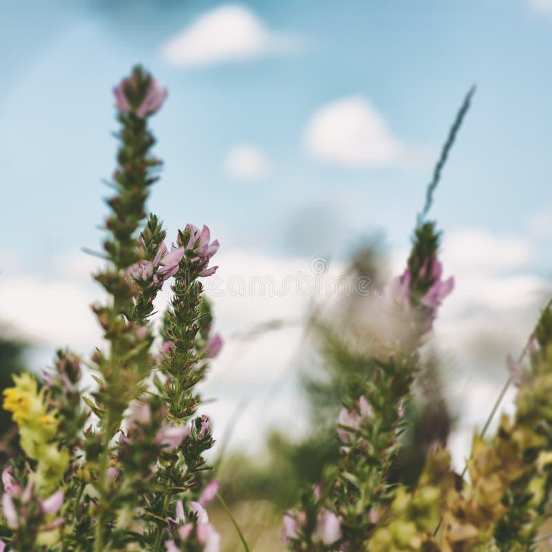 Wilde Blumen auf der Wiese lizenzfreies stockfoto