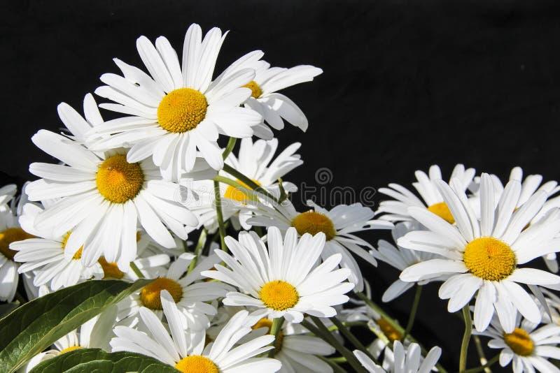 Wilde Blumen auf einem schwarzen Hintergrund stockfoto