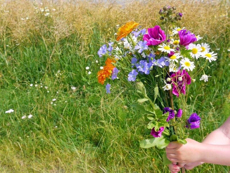 Wilde Blumen auf Wiese in der Natur lizenzfreie stockfotografie