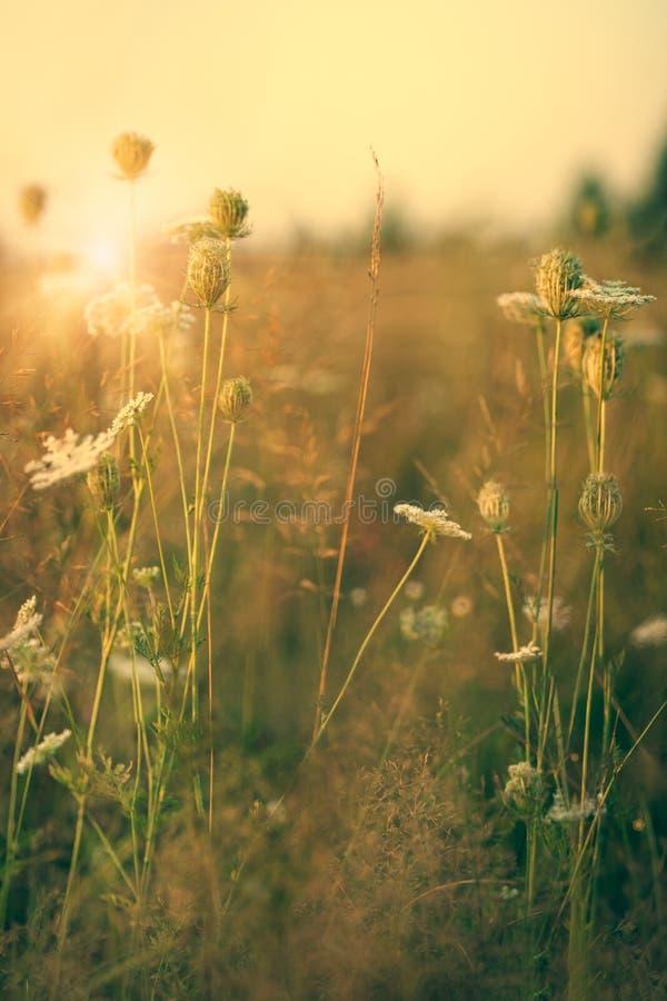 Wilde Blumen der Schönheit auf der Wiese lizenzfreie stockfotografie