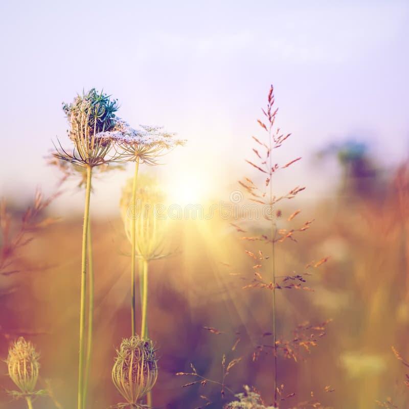 Wilde Blumen der Schönheit auf der Wiese stockbild