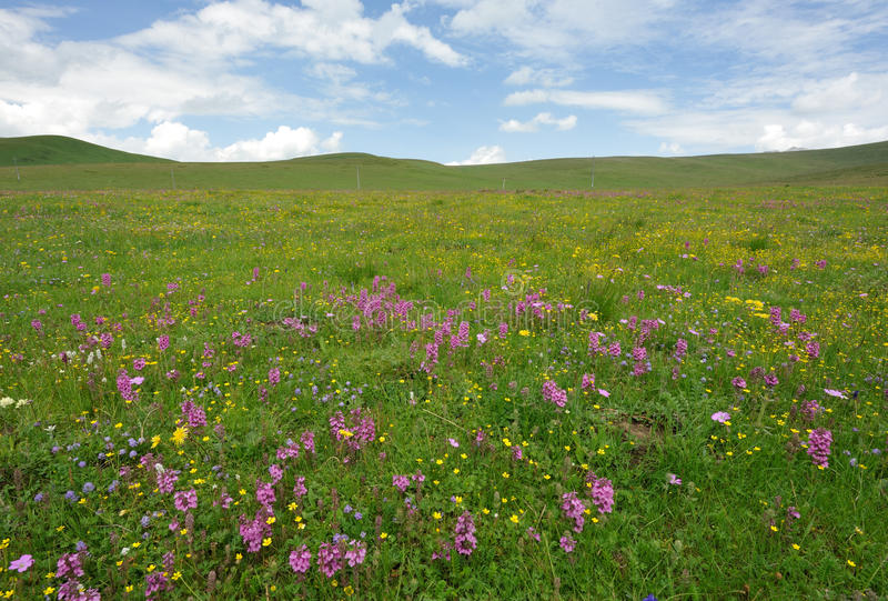Wilde Blumen in der Wiese lizenzfreie stockfotos