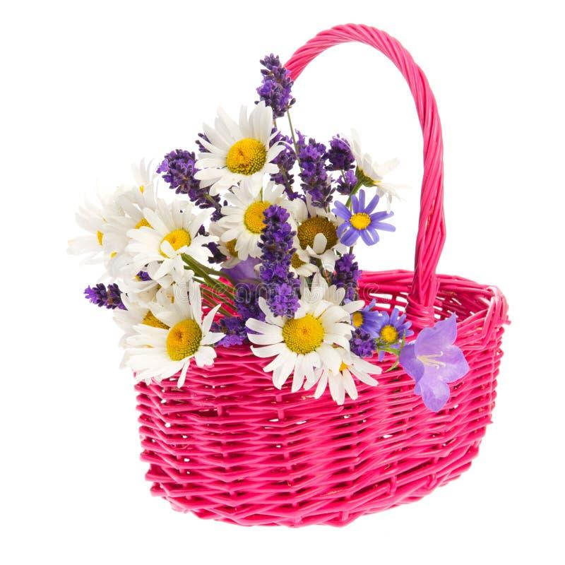 Wilde Blumen des Korbes stockbilder
