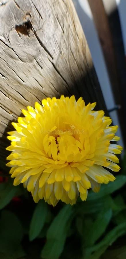 Wilde Blumen des Sommers stockfoto