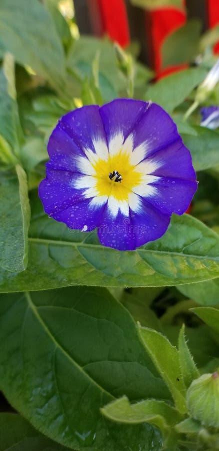 Wilde Blumen des Sommers stockfotos