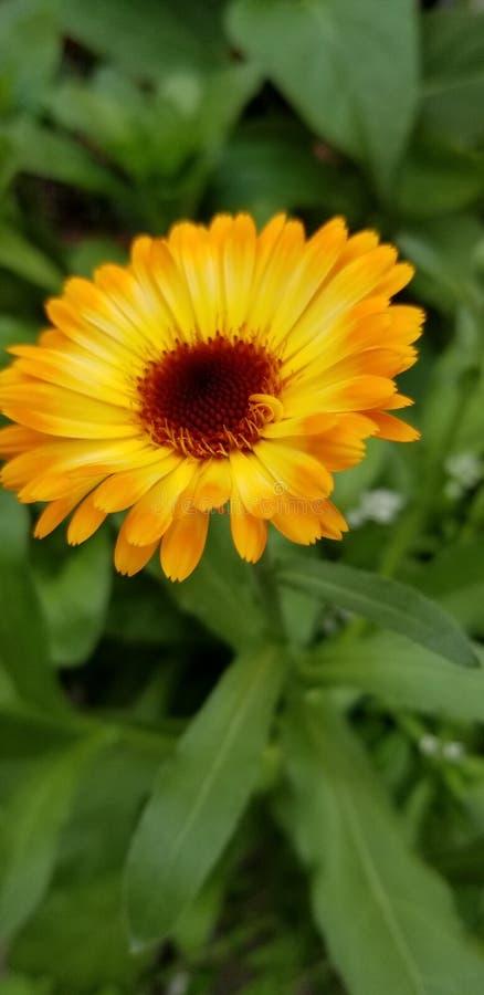 Wilde Blumen des Sommers lizenzfreies stockfoto