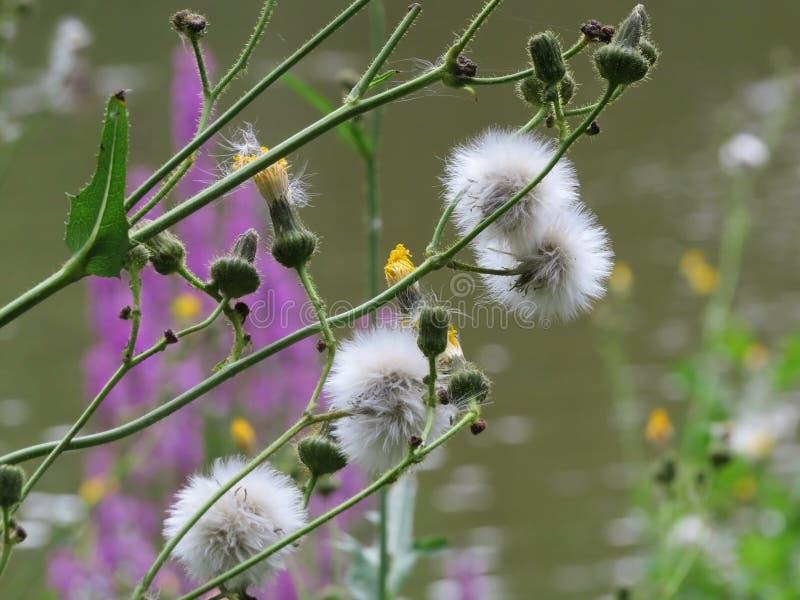 Wilde Blumen in eastham counrty Park stockbilder