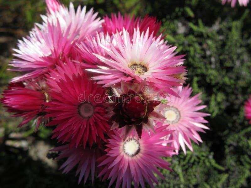 Wilde Blumen im Kap lizenzfreies stockbild