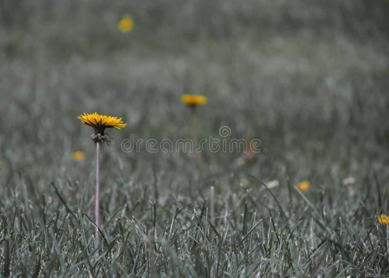 Download Wilde Blumen In Irland Im Sommer In Longford Stockbild - Bild von wild, sache: 96934143