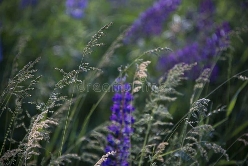 Wilde Blumen mit Brise stockfotos