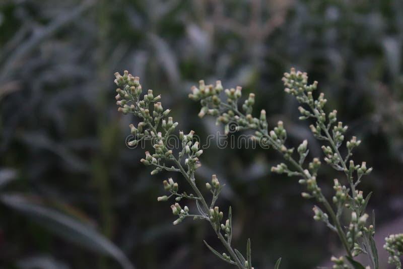 Wilde Blumen am Rand des Weges lizenzfreie stockfotografie