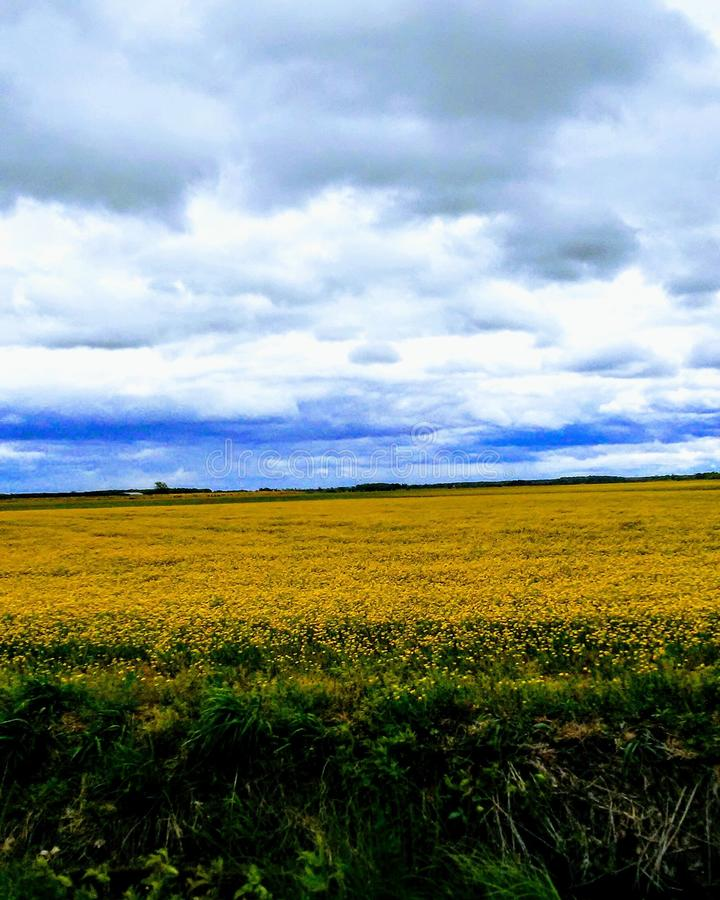 Wilde Blumen-Schönheit stockfotografie