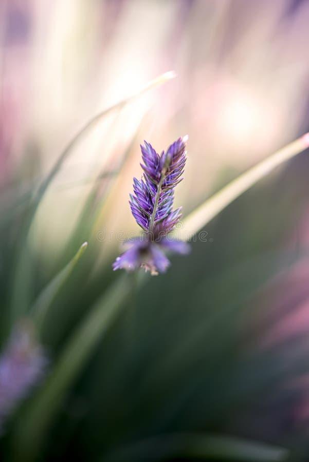 Wilde Blumen am Sommer stockfotografie