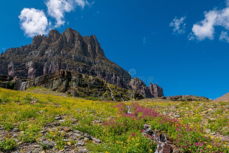 Wilde Blumen und Almwiesen entlang des Hidden Pass Trail lizenzfreie stockbilder