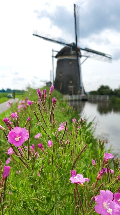 Wilde Blumen und eine niederländische Windmühle im Hintergrund lizenzfreies stockbild