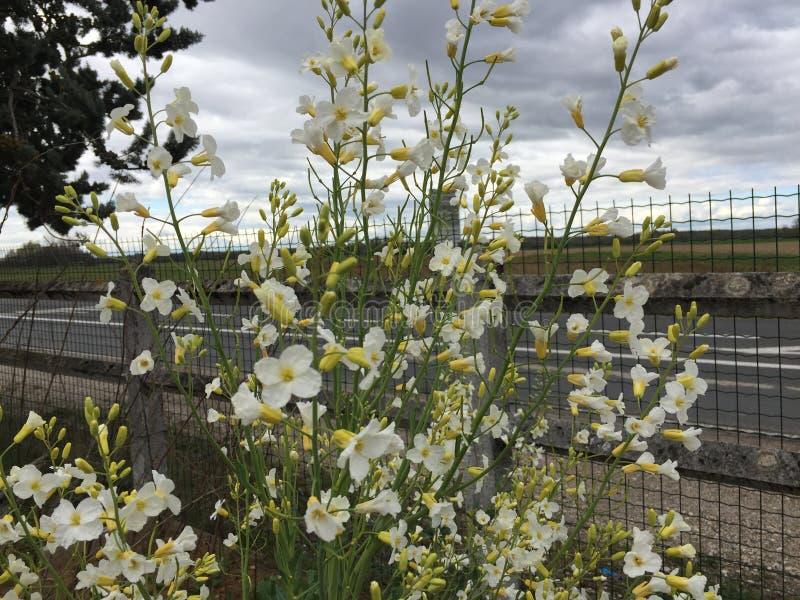 Wilde Blumen vor einem Zaun stockfotos