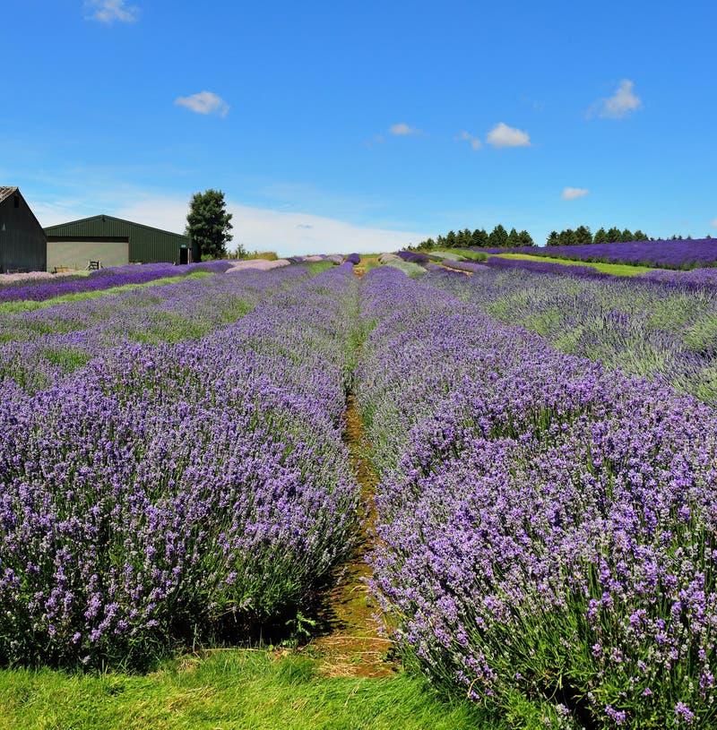 Wilde Blumen-Wiese in Frankreich stockfotografie