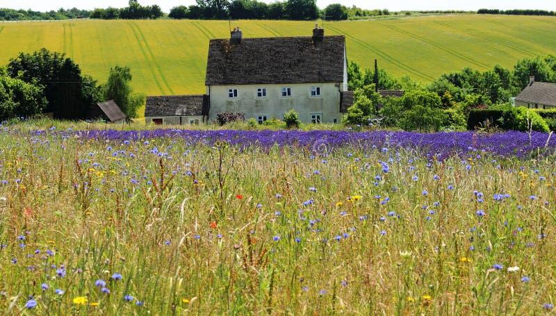 Wilde Blumen-Wiese in Frankreich lizenzfreie stockfotografie