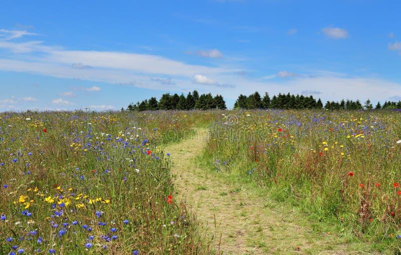 Wilde Blumen-Wiese in Frankreich stockfoto