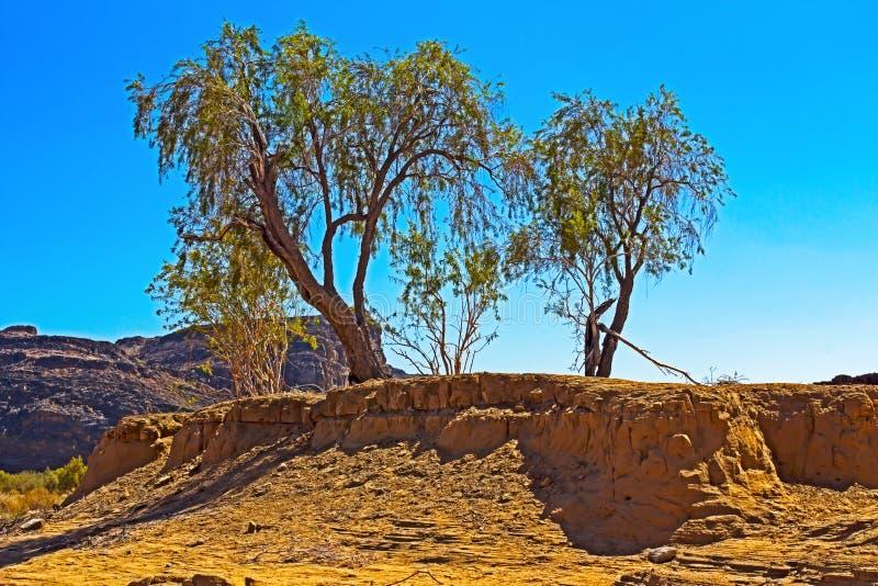 Wilde bomen die uit de zandbank groeien stock afbeelding