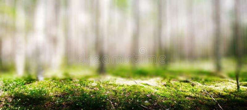 Wilde bomen in het bos stock afbeelding