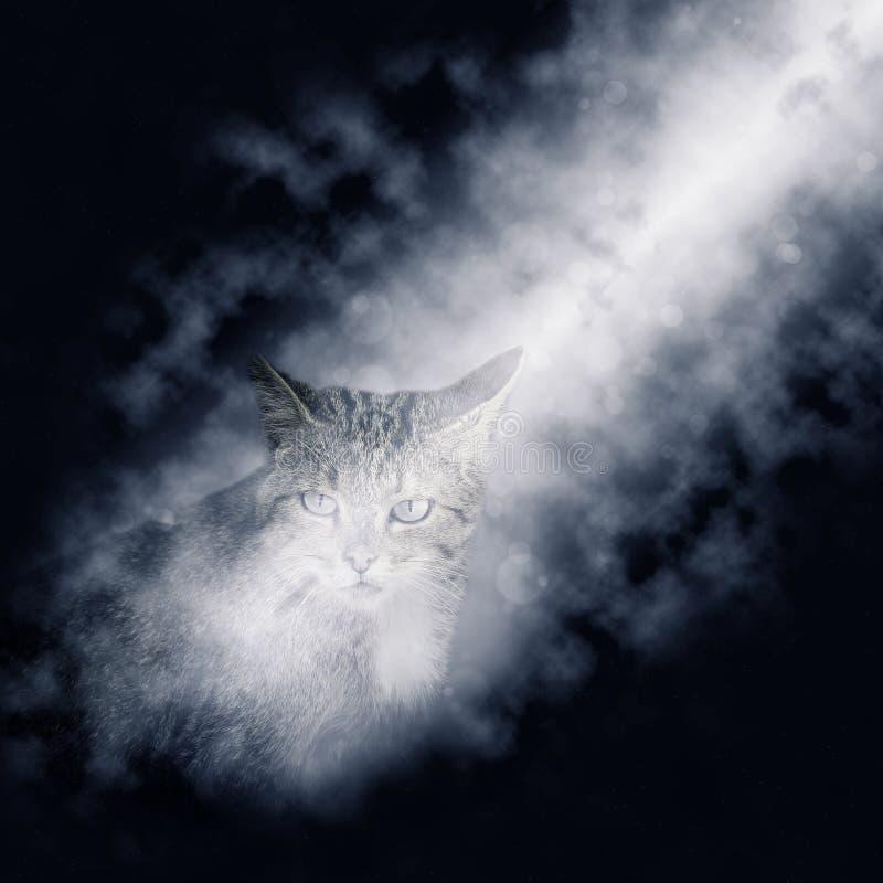 Wilde bosdiekattenzitting door een straal van maanlicht wordt aangestoken Europese wilde staking, Felis-silvestris stock foto