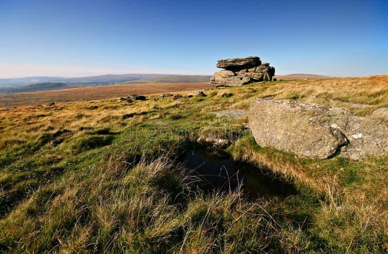 Wilde Dartmoor stock foto's