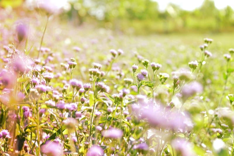 Wilde de aardachtergrond van het bloemgebied stock foto's