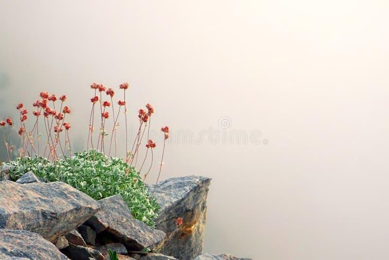 Wilde de lentebloemen in het mythische Onderstel Olympus, Griekenland royalty-vrije stock foto's