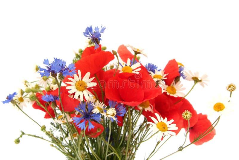 Wilde de zomerbloemen stock afbeeldingen