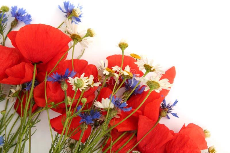 Wilde de zomerbloemen royalty-vrije stock afbeeldingen