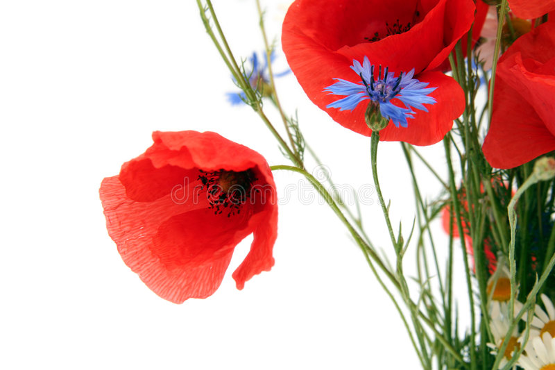 Wilde de zomerbloemen royalty-vrije stock afbeelding