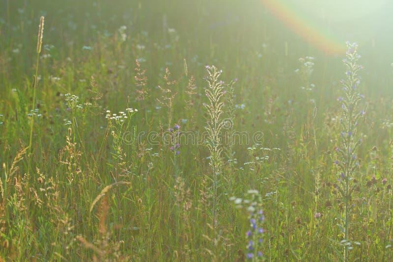 Wilde de zomerweide stock foto's