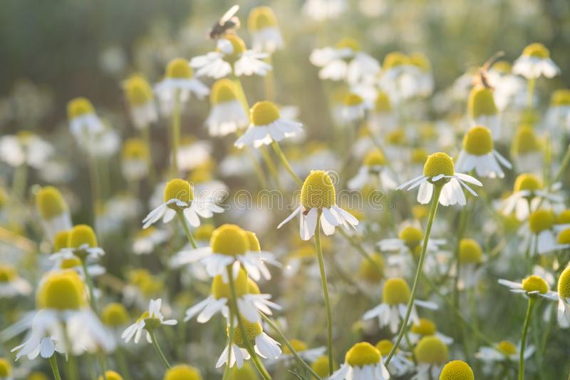 Wilde die bloemen op het gebied met onkruid en droog gras wordt omringd stock foto