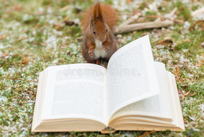 Wilde eekhoorn die een boek in openlucht lezen royalty-vrije stock foto