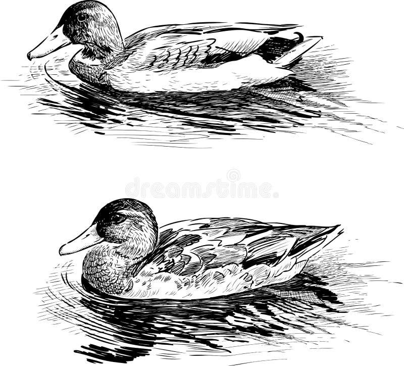 Wilde Eenden stock illustratie