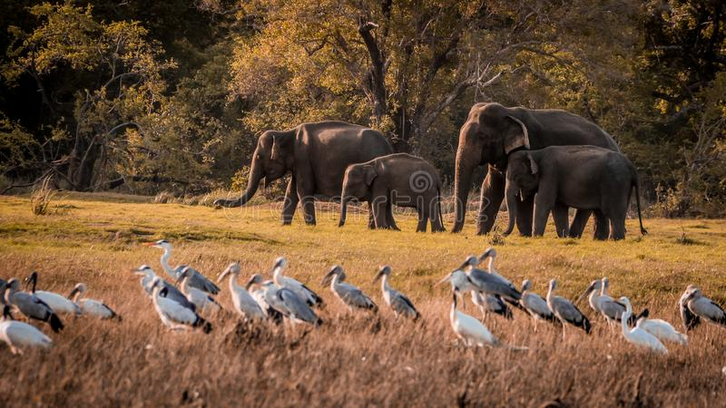 Wilde Elefantfamilie stockfotos