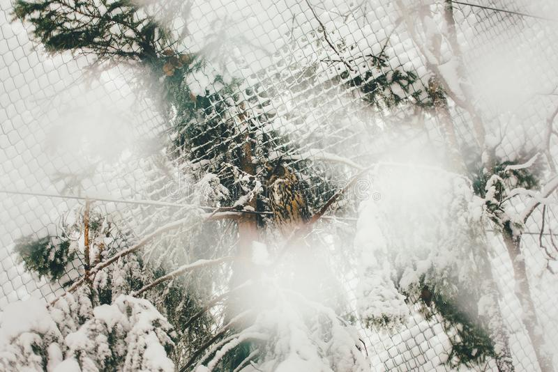 Wilde Eule im Schneewald lizenzfreies stockfoto