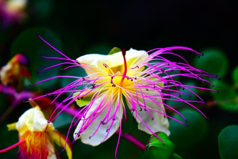 Wilde exotische bloem die op een stijging wordt gevonden royalty-vrije stock afbeelding