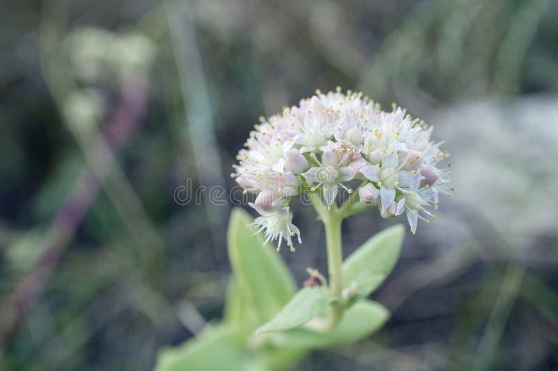 Wilde gebiedsbloemen stock foto's