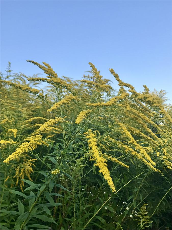 Wilde geel stock afbeelding