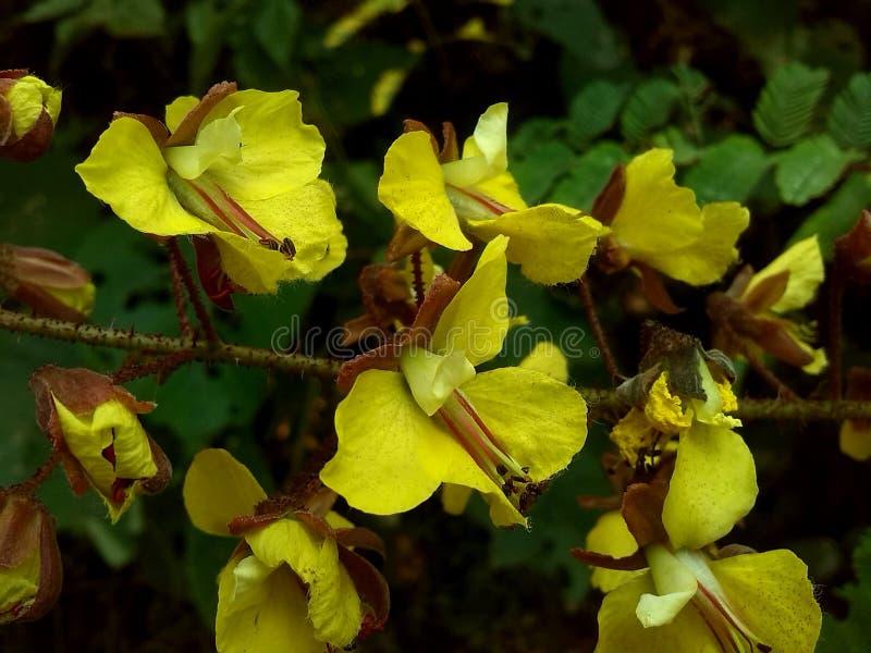 Wilde gelbe Blumen stockbild