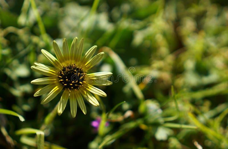 Wilde gele bloem stock afbeeldingen
