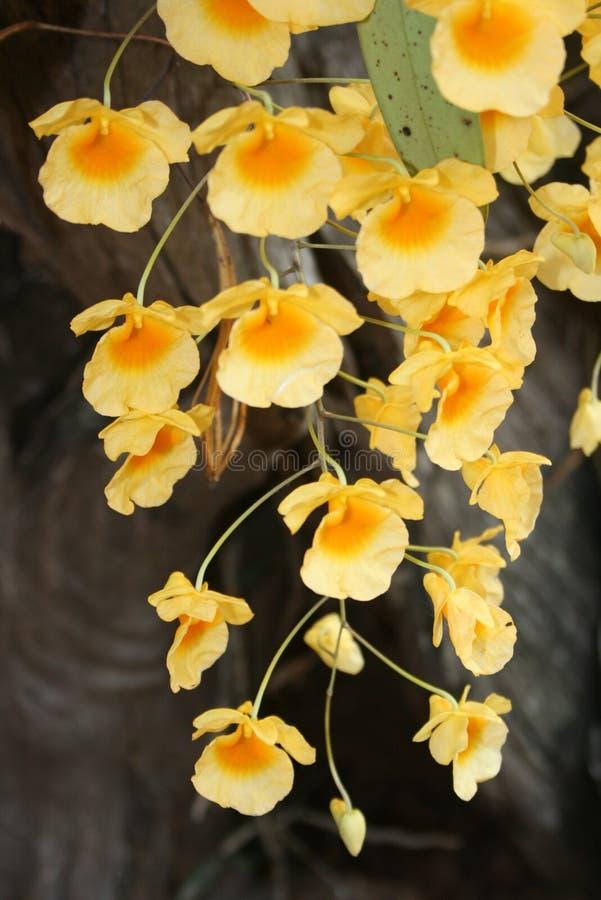 Wilde gele orchideebloemen stock fotografie