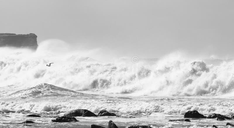Wilde golven bij kust stock foto's