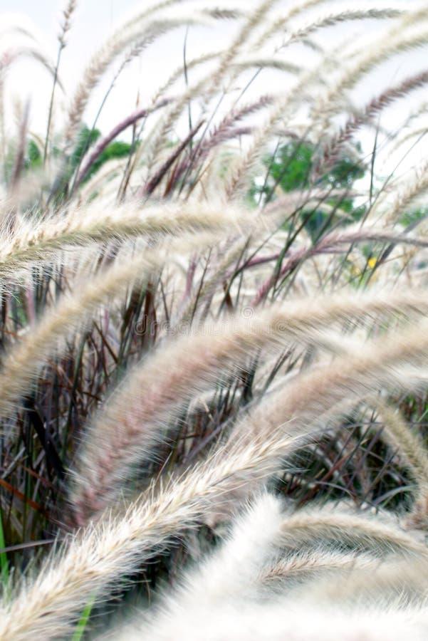 Wilde grassen stock fotografie