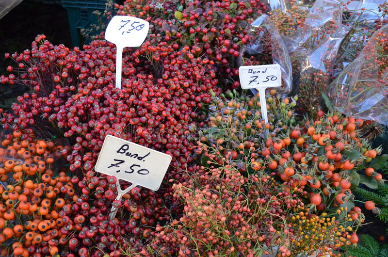 Wilde Hagebutten auf dem Markt eines Landwirts lizenzfreies stockbild
