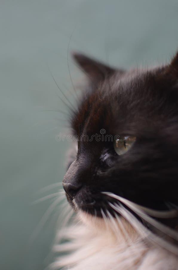 Wilde kat royalty-vrije stock foto