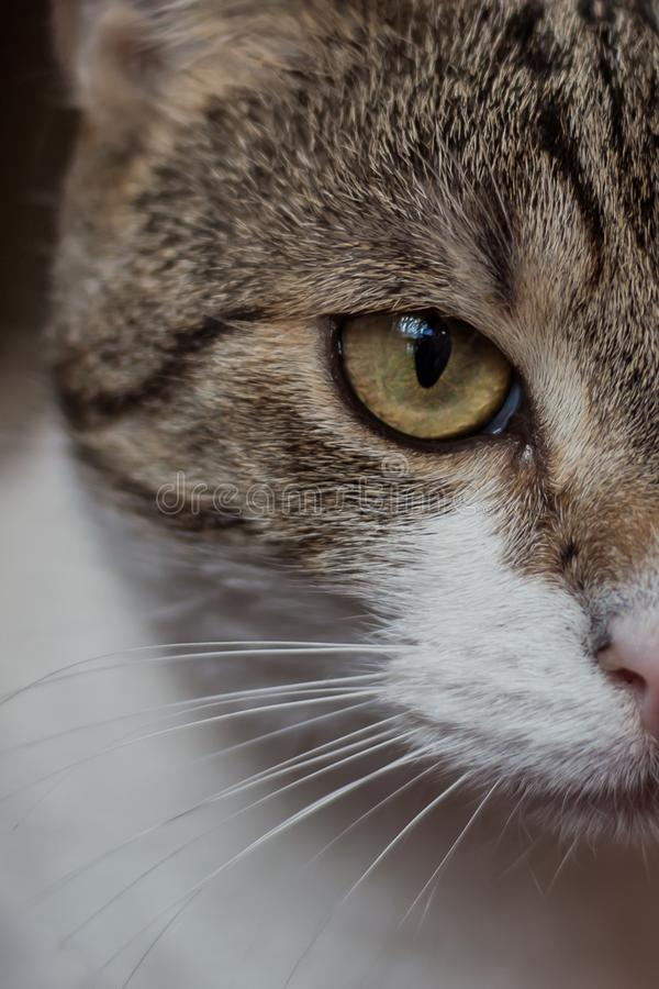 Wilde kat in mijn huis royalty-vrije stock foto's