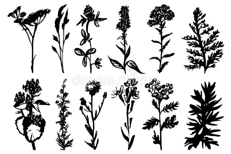 Wilde kruiden zwarte inkt, royalty-vrije illustratie
